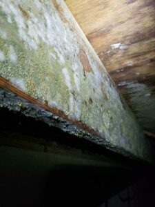 Causes & Risks of Attic Mold