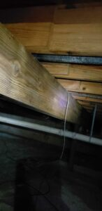 Causes & Risks of Basement Mold