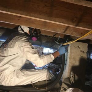 Expert Attic Mold Remediation Service