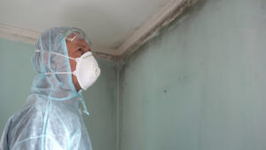 Schedule professional mold remediation for guaranteed results.