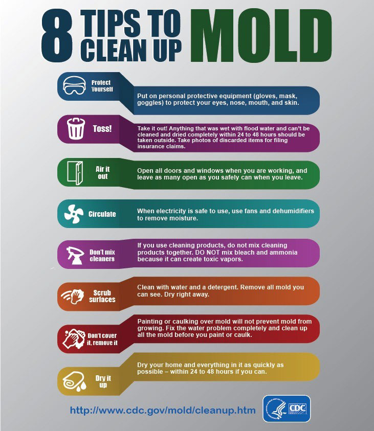 mold-cleanup