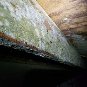 Mold Remediation & Inspection Services