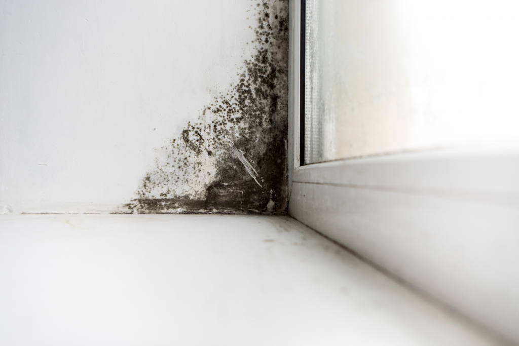 Black mold lingering in the corner of a property.