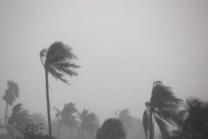 Contact your insurance carrier to determine hurricane damage coverage amounts and fine print - restoration 1