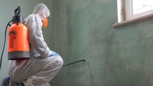 Keep mold out of your business with the professional mold remediation process