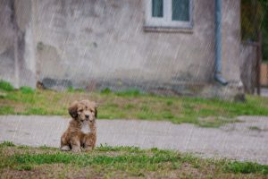 Here's how to keep everyone safe, including your pets during Hurricane Dorian