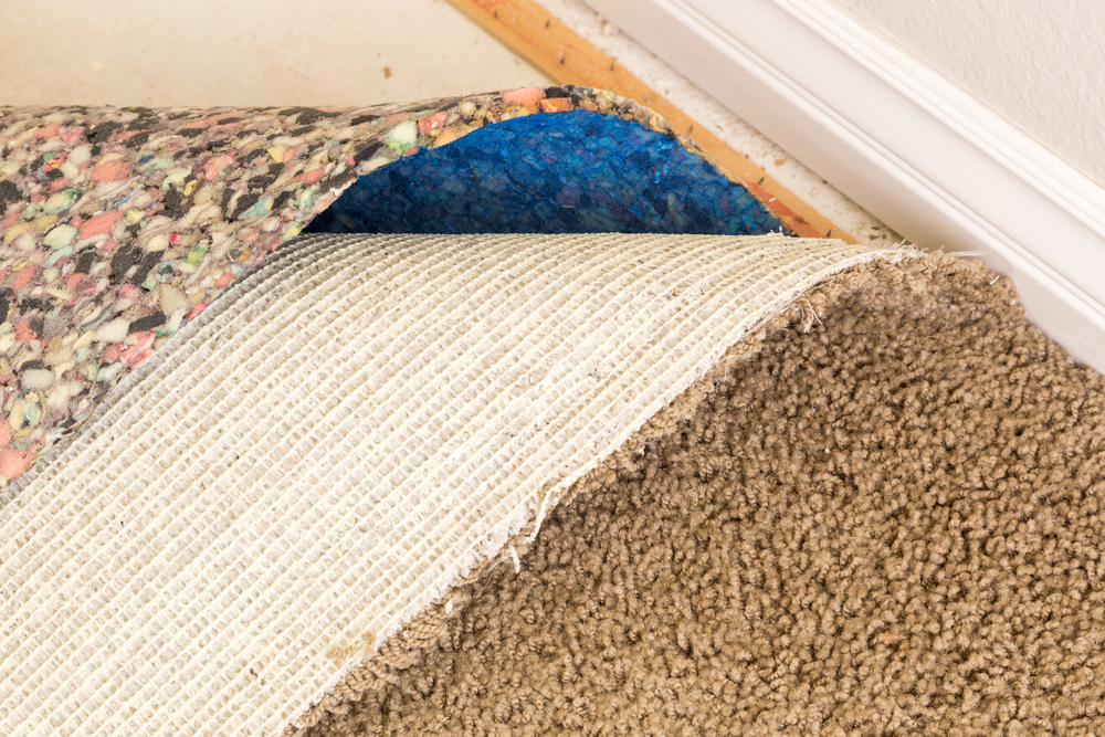 Many types of mold grow under the carpet with enough moisture