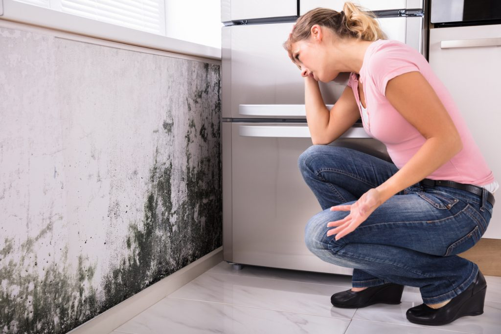 5 Reasons Why Mold Remediation Should Be Handled by Professionals |  Restoration 1