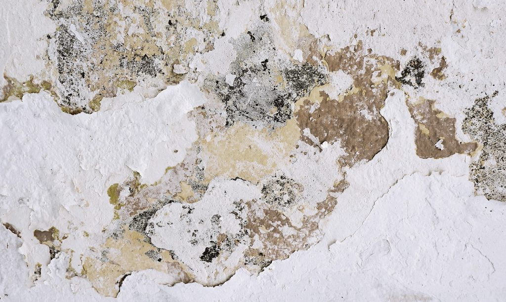 Small Andrew Buchanan 0Lxq 5Lxeda Unsplash - Restoration 1 - Absolutely Everything You Need To Know About Mold Spores